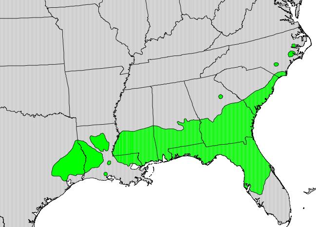 Magnolia_grandiflora_map